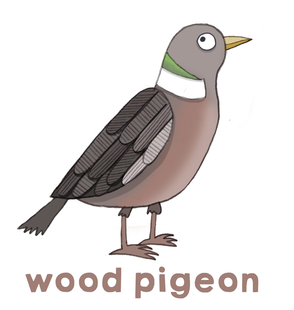 Garden birds: starling, woodpigeon, robin + great tit - Beetle