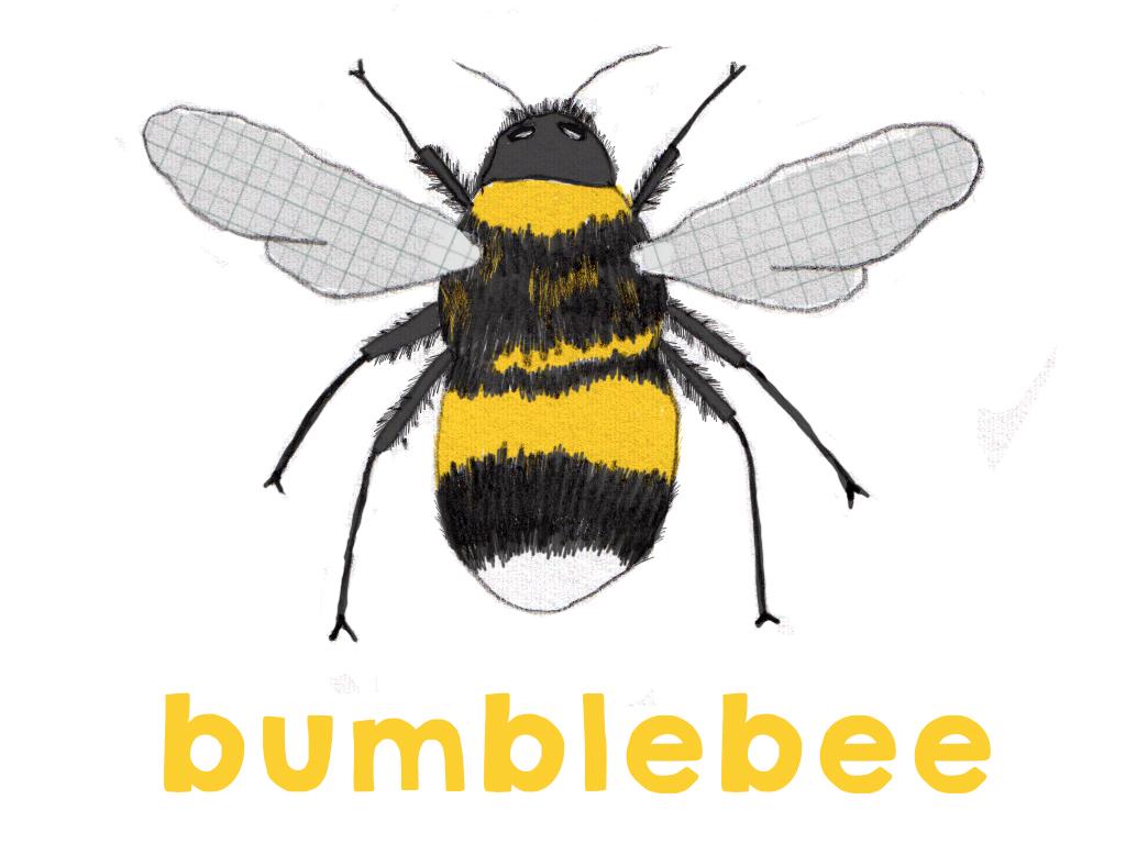Different types of bees - Beetle CherryBeetle Cherry - photo#8