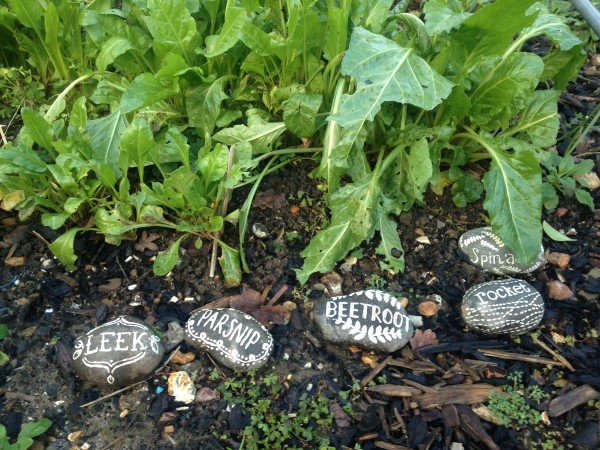 grow your own veg stones