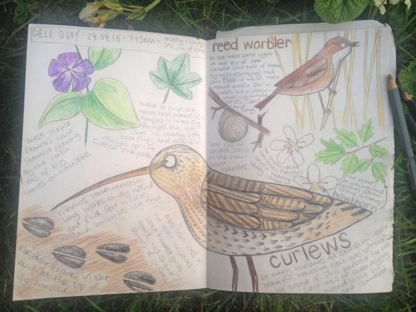 nature journal beetlecherry