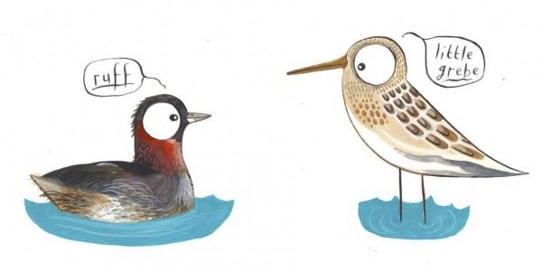 stumclellan waterbirds2